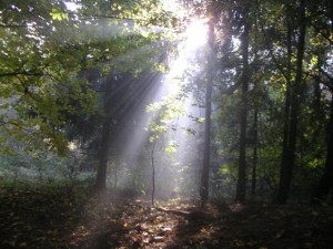 Light through forest